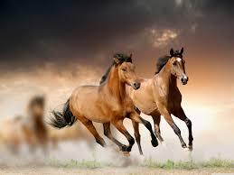 brown horse stallion mustang 2 rv trailer or wall mural decal brown horse stallion mustang 2 rv trailer or wall mural decal decals graphics sticker art
