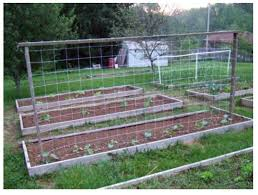 add trellis netting as a cure to cucumber botrytis