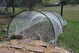 bird netting for gardens home ideas for everyone