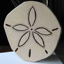 sand dollar crafts by amanda
