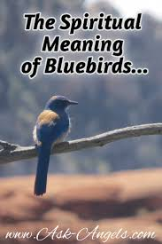 Symbolism Of A Tree the spiritual meaning of bluebird