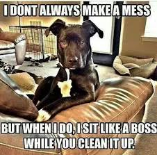 Mess Meme - don t always make a mess funny pictures quotes memes funny