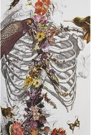 simple halloween tattoo flash best 25 rib cage ideas on pinterest human ribs human skeleton