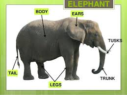 11 best animal body parts images on pinterest body parts vector