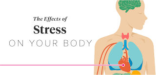 The Human Body Picture The Effects Of Stress On Your Body