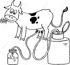 cow giving milk clipart clipartxtras