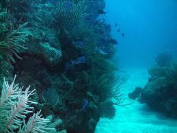 Rhode Island snorkeling images Giant stride dive shop jpg