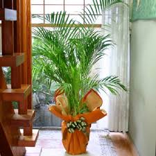 Home Decorative Plants Home Decor - Home decoration plants