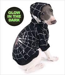 Dog Spider Halloween Costume 25 Spider Dog Ideas Dog Spider Costume