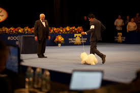 thanksgiving day dog show at the national dog show burberry wins a group 2 just incredible