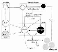 glucose sensing in pancreatic β cells diabetes