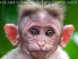 Monkey Face Meme - monkey face meme 28 images funny monkey meme thefunnyplace 35