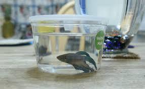 Beta Fish In Vase Terrarium