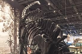 salt lake dinosaur museum best image dinosaur 2017