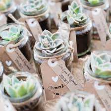 succulent wedding favors we these diy succulent favors so much more in this gorgeous