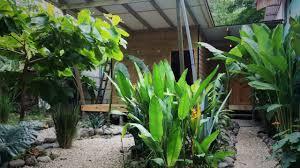 tropical pasta surf house and hostel santa teresa costa rica