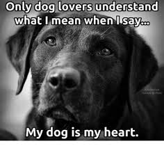 Dog Lover Meme - only dog lovers understand what i mean when i say nuskyn hickr my