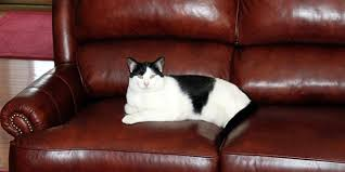 To Clean Leather Sofa Clean Your Leather Sofa Groomed Home