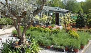 new zealand native plants and trees native trees english woodlands burrow nursery blog