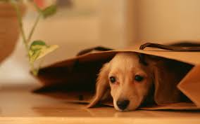 amazing dog wallpapers full hd pictures