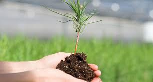 seedling tree nursery colorado state forest service