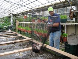 growing power grows fish veggies and community with aquaponic