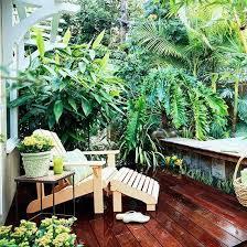 pflanzen fã r den balkon die besten 25 tropische pflanzen ideen auf tropische