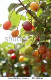 fresh tree stock photo 335479286