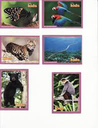 free 6 national geographic trading cards random animals