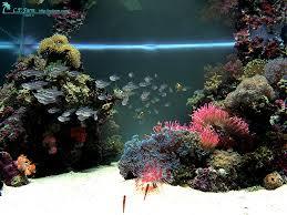 reef aquarium design design ideas photo gallery