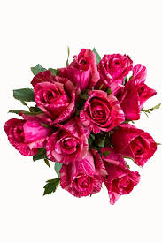 Bulk Roses Buy Bulk Pink Intuition Exclusive Rose Plant For Sale Online