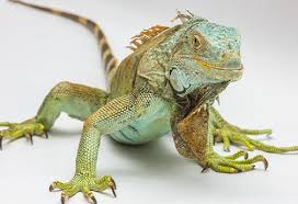 Seeking Lizard Professional Pet Sitters Provide Pet Care Solution For Savvy Snake