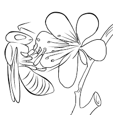 lightning bug coloring pages kids coloring