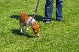 Dog In The Backyard by Ultimate Tip To Keep Your Dog Safe In The Backyard