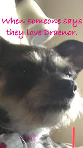 Puppy Memes - puppy memes wow amino
