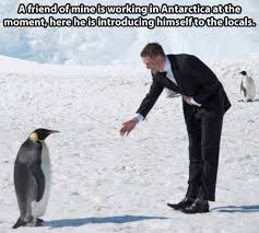 Funny Penguin Memes - penguins are the best193