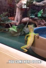 Lizard Meme - funny lizard
