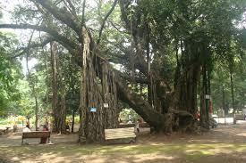 empress botanical garden in pune maharashtra india free post 4 u