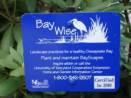 chesapeake native plants bay wise gardening university of maryland extension