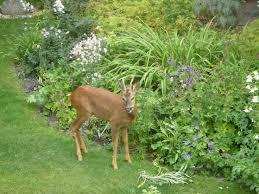 best 25 deer resistant annuals ideas on deer