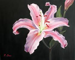 Pink Lily Flower Pink Tiger Lilly On Black Background Wallpaper Flowers