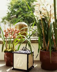 tips for growing cymbidium orchids