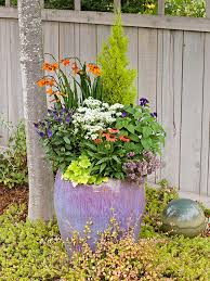 caring for potted plants