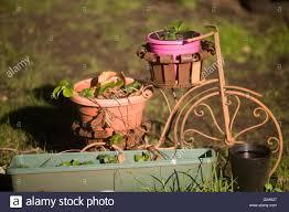 ornamental planters the edinburgh stock photo royalty