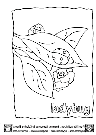 ladybug pictures for kids kids coloring