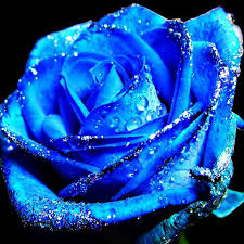 blue roses china blue flower blue climbing roses seeds flower