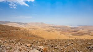 image result for israeli desert the yisraeli lionesses board
