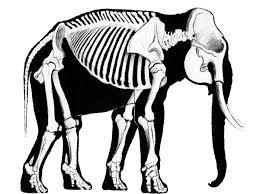 how big is the elephant u0027s heart elephant country