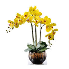 yellow orchid flower arrangment yellow orchids with leaves real touch flower
