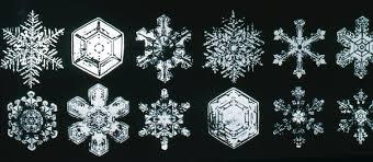 geometric designs in nature billzine
